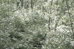 Unterholz Maasduinen I