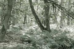 Unterholz Maasduinen II